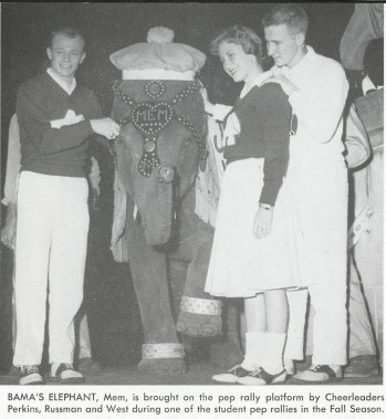 Bama's elephant, Mem, is brought on the pep rally platform by cheerleaders Perkins, Russman, and West during one of the student pep rallies in the Gall Season. (The University of Alabama Libraries Special Collections)