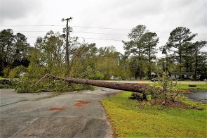 A fallen tree lies across a road during Tropical Storm Florence in Richlands, North Carolina. (Callaghan O'Hare/Bloomberg)