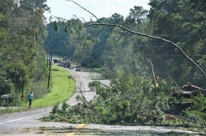 Downed trees were a common sight after Hurricane Michael hit. (Wynter Byrd/AlabamaNewsCenter)