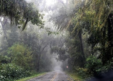 Hurricane Michael brought wind and rain as it made landfall in Florida. (Wynter Byrd / Alabama NewsCenter)