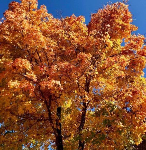 Fall colors are on full display across Alabama. (Bob Blalock / Alabama NewsCenter)