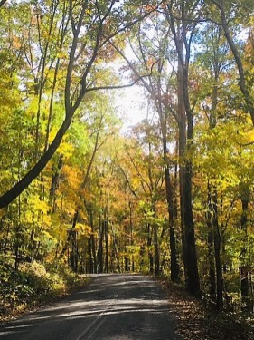 The range of reds, yellows and oranges blending with the greens and blue skies give color to Alabama this fall. (Donna Cope/Alabama NewsCenter)