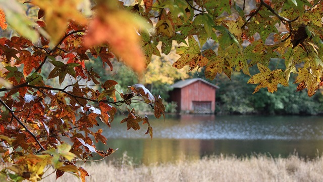 Fall's finery is one of many things to be thankful for in Alabama