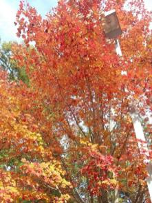 Fall brings out the best colors in Alabama. (Tracy Thomas)