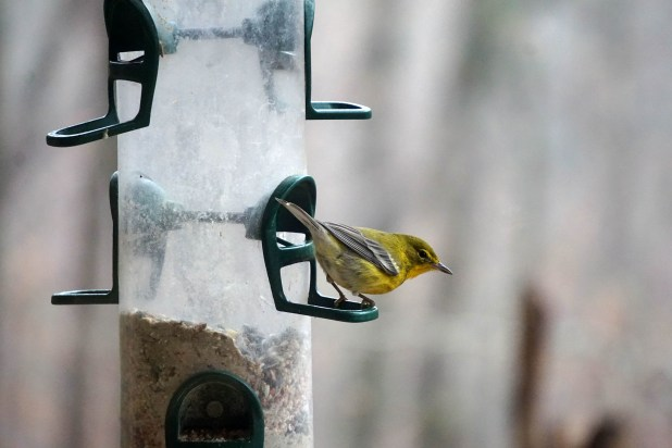Alabama Wildlife Center. (Erin Harney / Alabama NewsCenter)