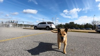 Evidence suggests Pup-Pup had a difficult life before showing up as a stray at Alabama Power Plant Greene County but her life ever since has bee much more pleasant. (Brittany Faush / Alabama NewsCenter)