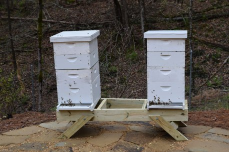 Hives such as those installed by Hickman in Trussville reap sweet rewards for the owners. (Donna Cope/Alabama NewsCenter)