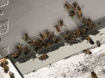 Each hive contains about 25,000 bees. (Donna Cope/Alabama NewsCenter)