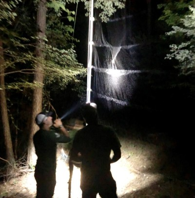 Researchers capture and measure Alabama bats during the annual Bat Blitz. (Laura Thomas)