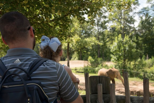 Birmingham Zoo visitors get a look at the new kids on the block. (Brittany Faush/Alabama NewsCenter)