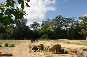 The Birmingham Zoo's latest additions, two African male elephants, are still settling in. (Bria Bailey/Alabama NewsCenter)