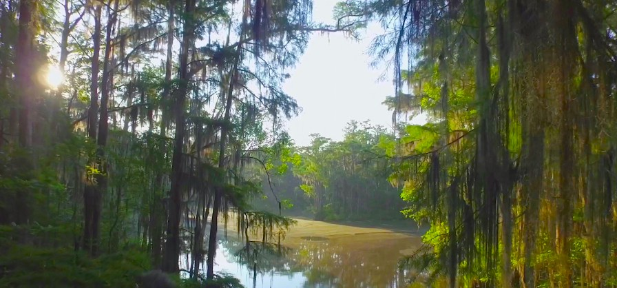 Scenes from Alabama (The Nature Conservancy of Alabama)