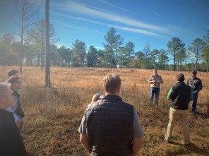 New NFWF grants will help restore Alabama's longleaf pine populations. (Justin Averette / Alabama NewsCenter)