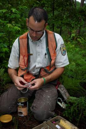 Eric Spadgenske with the U.S. Fish and Wildlife Service bands red-cockade woodpecker hatchlings on Alabama Power's Lake Mitchell. (Bill Snow / Alabama NewsCenter)