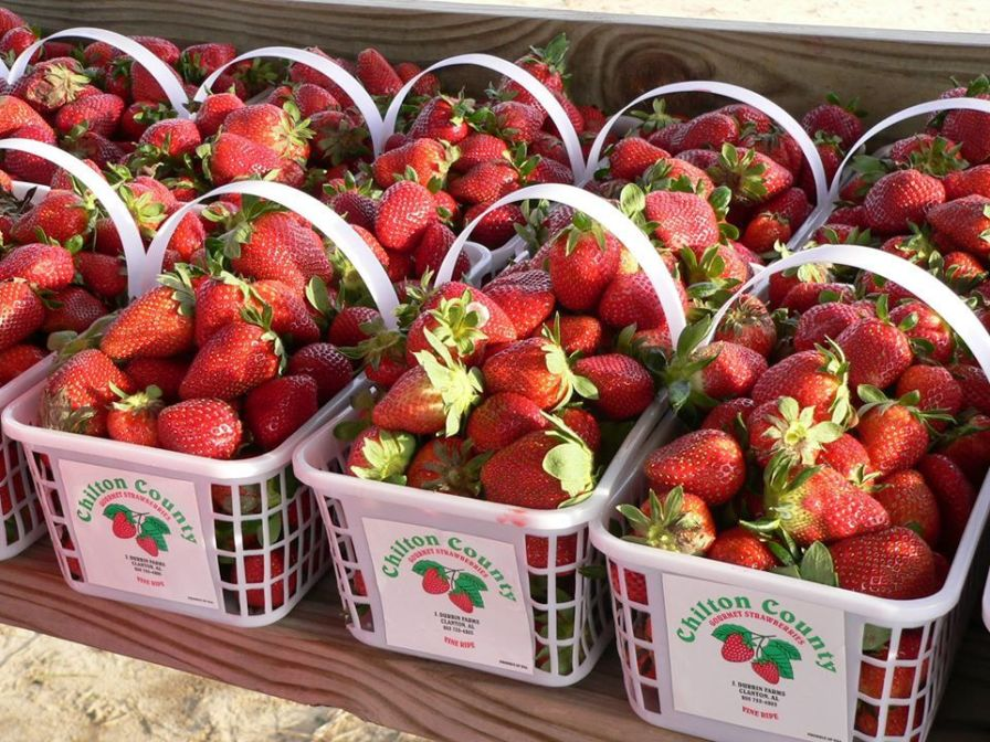 The freshest strawberries make scrumptious cobblers and ice cream. (Sugar Hill Farms)