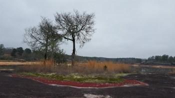 Flat Rock Park features 20 acres of diverse, colorful flora growing on a granite outcrop. (Katie Horton)