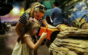 The Cook Museum of Natural Science will reopen on July 8, following temporary closure from COVID-19 precautions. (Cook Museum of Natural Science)