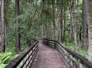 A 2,000-square-foot raised boardwalk awaits. (Donna Cope/Alabama NewsCenter)