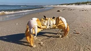 Alabama joins coastal states to Embrace the Gulf
