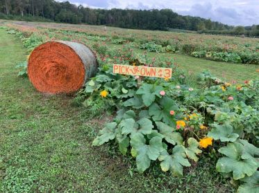 U-pick 'em pumpkins are popular. (Bennett Farms / Alabama NewsCenter)