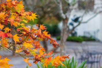 One expects to find beauty at the Birmingham Botanical Gardens and the venue doesn't disappoint when it comes to fall colors. (Dennis Washington / Alabama NewsCenter)