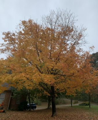 The transitional nature of autumn in Alabama means we often get the vibrant colors of fall, a preview of winter and a reminder of summer often at the same time. (Donna Cope / Alabama NewsCenter)