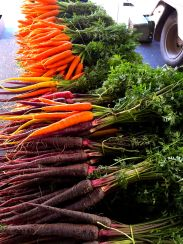 Heirloom carrots - beautiful