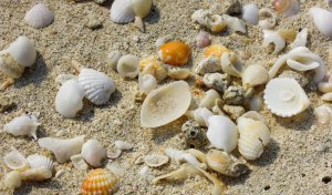 Dubai gyerek strand program kagyló