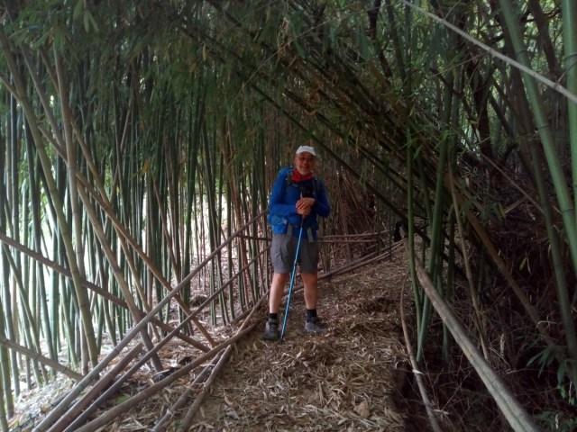 Enrique entre cañas de bambú