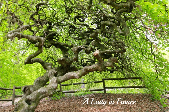 The Forest of Fairy Trees