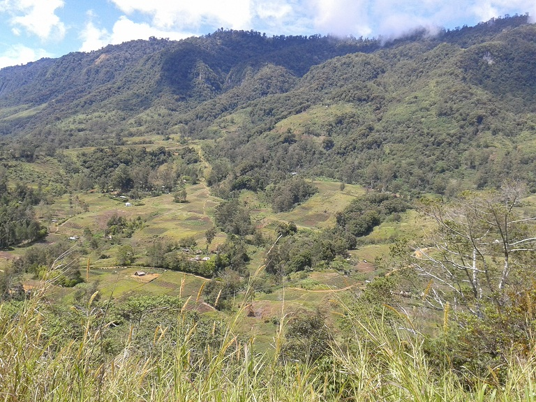 The countryside round Mount Hagen is lush and green, dotted with villages and little wooden huts