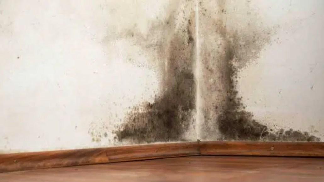 تسرب المياه يؤدي إلى ظهور العفن