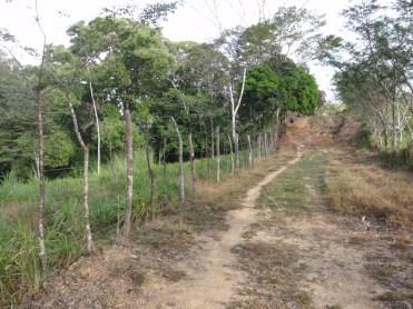 El camino se vuelve un sendero
