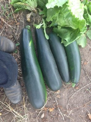 Monstercourgettes