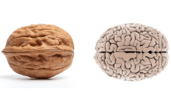 أطعمة تشبه أعضاء من جسم الإنسان الجوز والدماغ