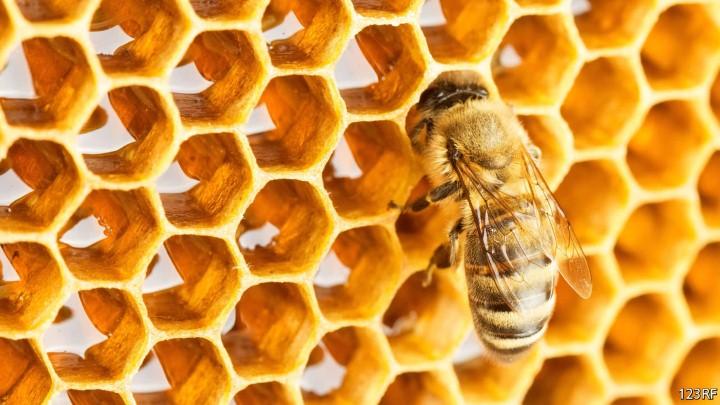 خلية أو قفير النحل