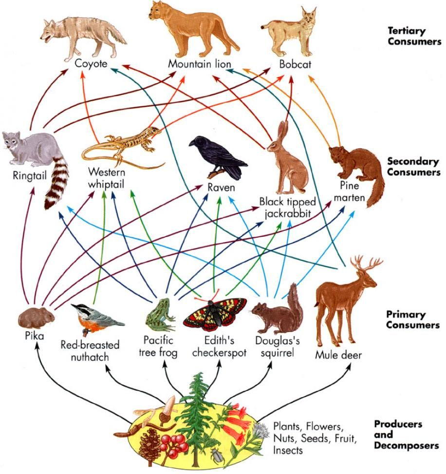Contoh dan Penjelasan Rantai Makanan di Hutan Tropis