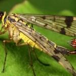 مكافحة حشرة العتة