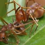 مكافحة النمل وابادته
