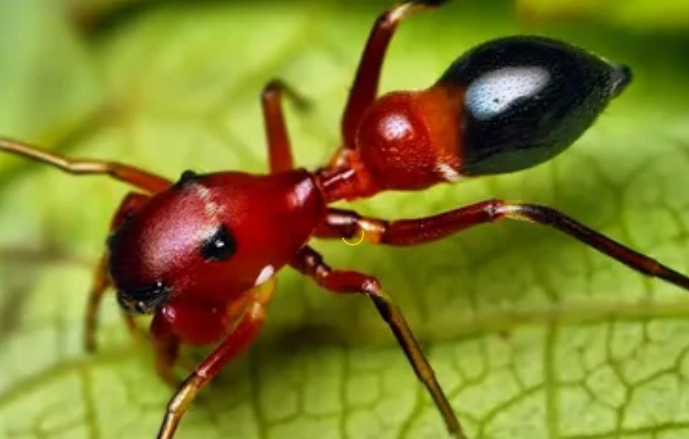 كيفية القضاء ع النمل