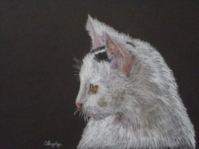 White Cat: Colored Pencil