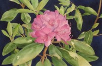rhododendron_cl_640