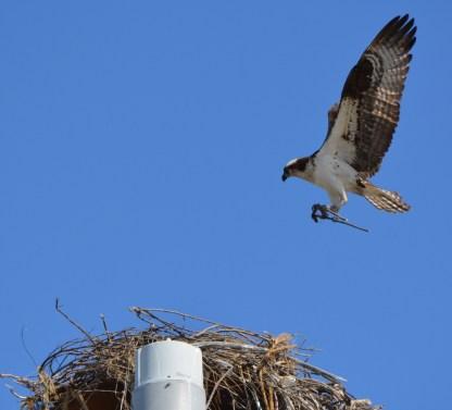 Nest building 3
