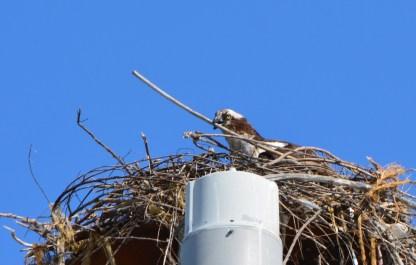 Nest building 7