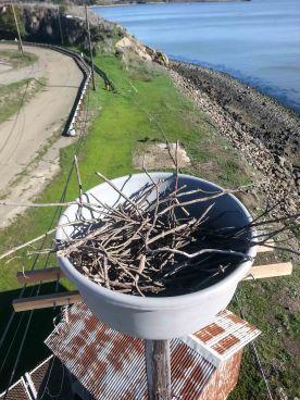 Pt. Molate nest. Photo by Tony Brake.