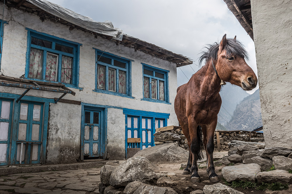 Horse at Lukla village, Nepal