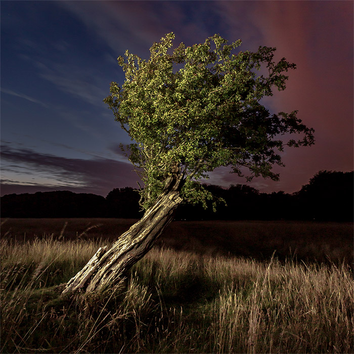 The Tree and the Darkness #1