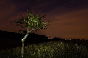 The Tree and the Darkness #2 Phoenix Park - Dublin