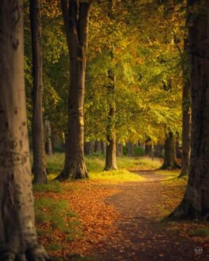 Autumn leaves at Phoenix Park, Dublin