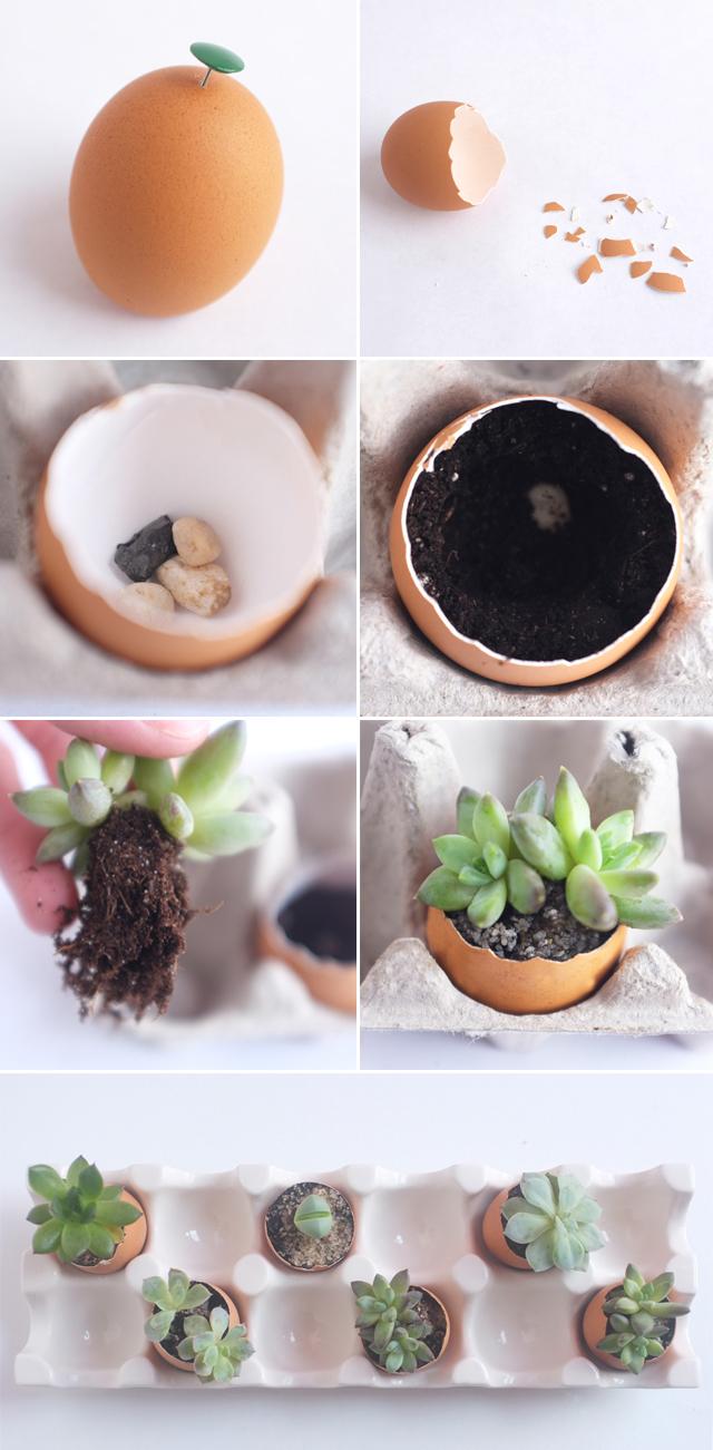 Egg Succulents DIY copy